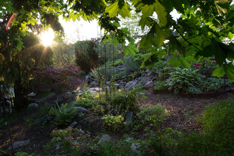 Ulfs bild från trädgården 1